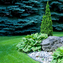 Organic Tree and Shrub Service